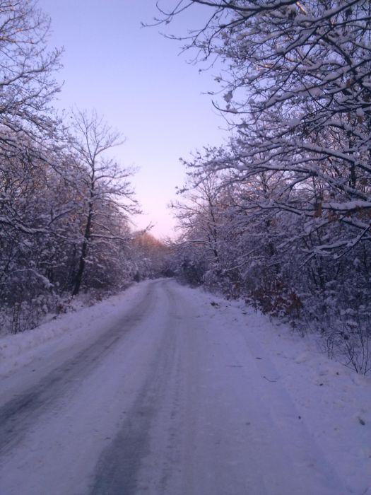 Drumul spre Humele ce trece prin pădurea Voineasca  în timpul iernii